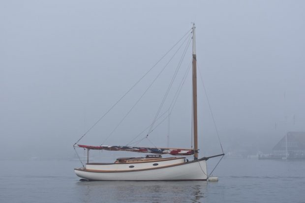 Martha's Vineyard Fog Tigress