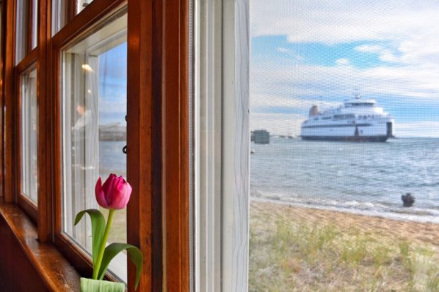 Must Do's of Vineyard Haven Black Dog view